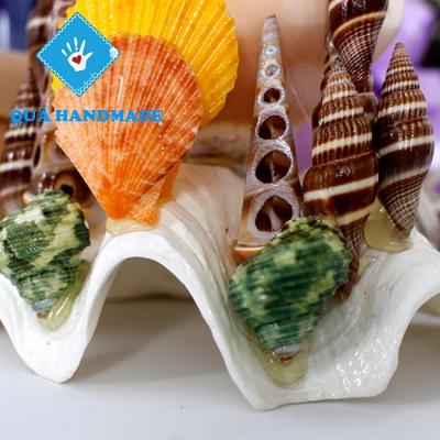 Đèn ngủ vỏ ốc cối & nhum biển xanh